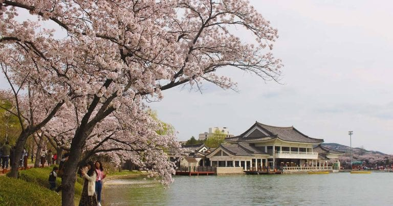 Spring in Korea: Photos of 5 Must-visit Destinations