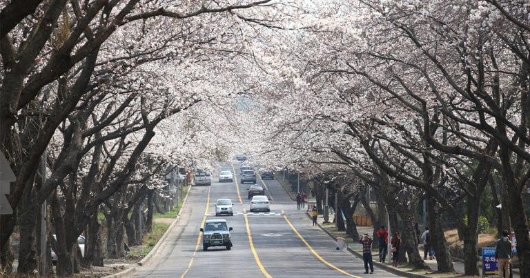 Korea's Spring Festivals in March 2021