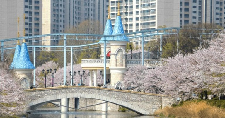 Top 5 Cherry Blossom Festivals in Seoul
