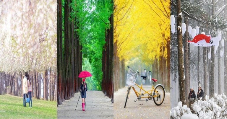 An Ultimate Guide to Nami Island (Namiseom) in Korea