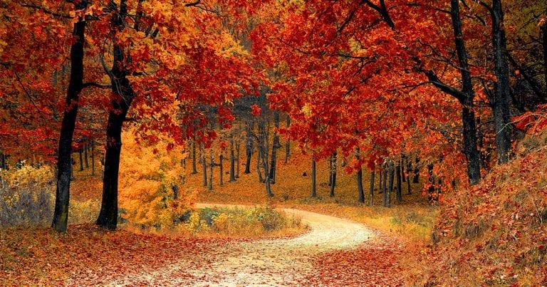 The Best Autumn/Fall Foliage Trails Around Busan 2020