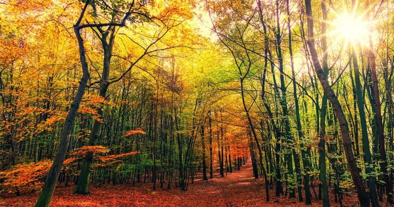Autumn/Fall Foliage Day Trips from Seoul – A to Z
