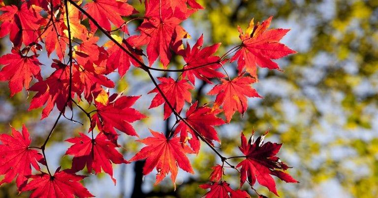 10 Best Places to Enjoy Autumn Foliage in Jeju Island